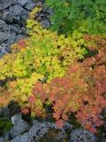 Fall-Blätter mit Steinen Stockbild