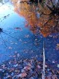 Fall-Blätter in Nordost-Ohio Lizenzfreie Stockfotografie