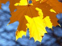 Fall-Blatt im blauen Himmel lizenzfreie stockbilder