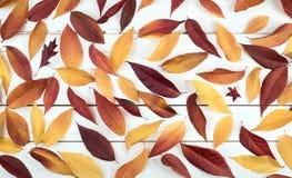Fall-Blatt-Stillleben-Anzeige, die mit natürlichen warmen Tönen hübsch ist Blätter umfassen den rustikalen hölzernen Brett-Hinter Lizenzfreie Stockfotos