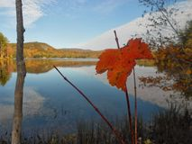 Fall-Blatt in West-Maine Lizenzfreies Stockbild