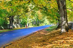 Fall blue road with orange leafs and large trees. Stock Images