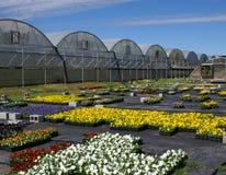 Fall-Blumen und Gewächshäuser Stockfotos