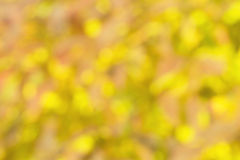 Fall Blur Royalty Free Stock Photos