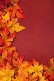 Fall Border royalty free stock photography
