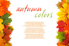 Fall border. Border of colorful autumn leaves with place for your text on white Royalty Free Stock Photo