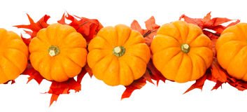 Fall border or element with pumpkins. Fall border element with small pumpkins and red leaves Stock Images