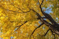 Fall in Botaical Garden Stock Photo