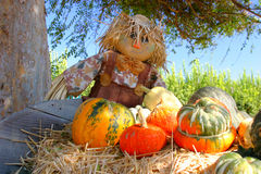 Fall Bounty. A scarecrow along with a cornucopia of pumpkins on a hay bale stock photography