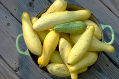 Fall Bounty Squash in a Pot Royalty Free Stock Photo