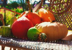 Fall Bounty. Various Vegetables from a Fall Harvest on a Park Bench Royalty Free Stock Photography