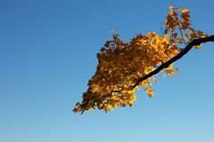 Fall Branch before a Clear Sky Right Royalty Free Stock Images