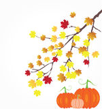 Fall Branch Royalty Free Stock Images