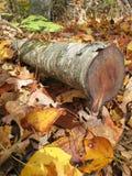 Fall-Brennholz Stockfoto