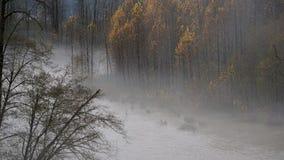 Skokomish river floods from heavy rain stock photo