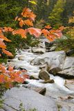 Fall Brook. A colorful brook in the fall season Royalty Free Stock Photography
