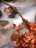 Fall brook. Rushing brook with fall leaves in it royalty free stock photos