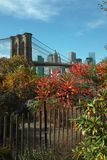Fall Colors in Brooklyn Bridge Park, New York, USA Stock Image