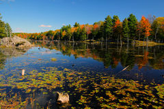 Fall on Buck lake Ontario Royalty Free Stock Photo