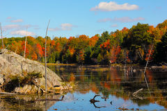 Fall on Buck lake Ontario Royalty Free Stock Photos