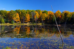 Fall on Buck lake Ontario Royalty Free Stock Photography