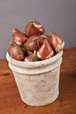Fall Bulbs Royalty Free Stock Image