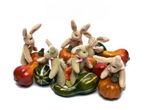 Fall Bunnies Stock Image