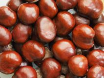 Fall came and chestnuts spilled. Brown background with chestnuts royalty free stock images