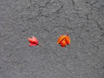 Fall came quietly on asphalt pavement Stock Photo