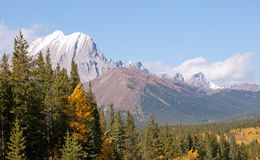 Fall in the Canadian Rockies Royalty Free Stock Images