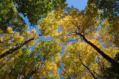 Fall Canopy Royalty Free Stock Photos