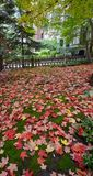 A Fall Carpet Stock Images