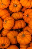 Fall Carving Pumpkin Gourds in bulk. A groups of pumpkins/squash that have been picked and are ready for Halloween or Thanksgiving royalty free stock photo