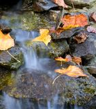 Fall cascade. Small waterfall that is covered in autumn leaves stock photos