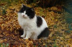 Fall cat Royalty Free Stock Photo
