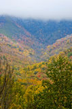 Fall changing to winter in The Great Smoky Mountains. Royalty Free Stock Photography