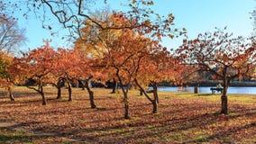 Fall at the Charles River Royalty Free Stock Photo