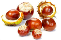 Fall chestnuts Stock Photos