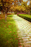 Fall, China's urban trail. Royalty Free Stock Photography