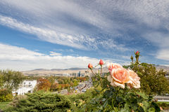 Fall in the City of trees Boise Idaho with a rose. Peach colored rose and the city skyline of Boise Idaho Royalty Free Stock Images