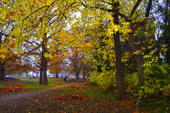 Fall city trees. Fall colored park vegetation in rainy afternoon.November 18th 2014. Varna city.Bulgaria royalty free stock images