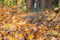 Fall Cleanup Royalty Free Stock Images