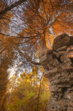 Fall Cliff. Tree growing out of a cliff in the fall (Door County, Door Bluff Headlands Park Royalty Free Stock Photos