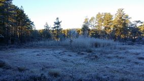 Fall. The cold fall setting in, freezing the peatlands Royalty Free Stock Photo