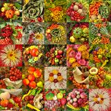 Fall  collage Stock Image