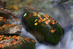 Fall color. Great Smoky Mountains royalty free stock photography