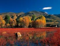 Fall color Stock Photos