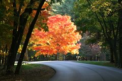 Fall color Stock Images