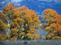 Fall Color. Colors of trees in the fall Stock Image
