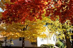Fall color Royalty Free Stock Image